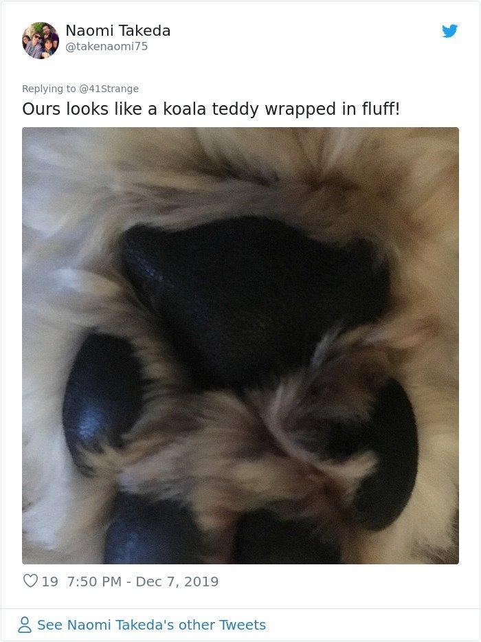 собачьи лапки