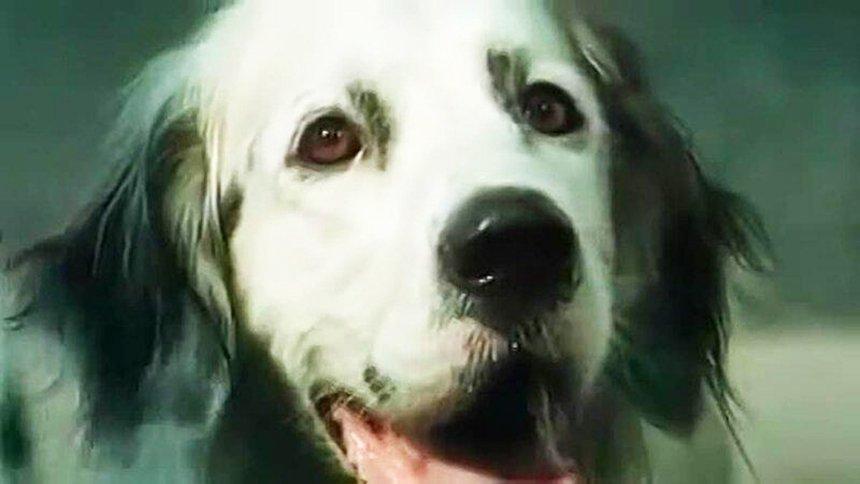 Три собаки-актера, которых вы знаете с детства