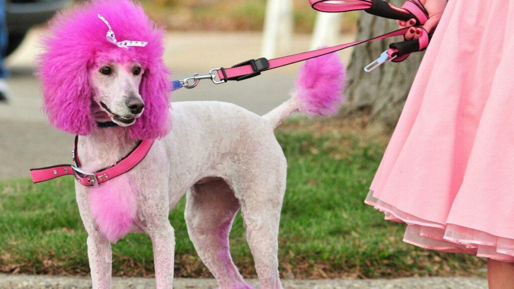 Разноцветные собаки: безопасность и мода