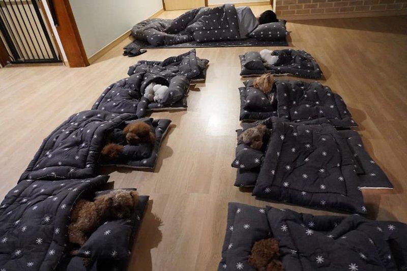 dogs nap time puppy spring daycare center 10 5e0086711ba36  880 - О НАС