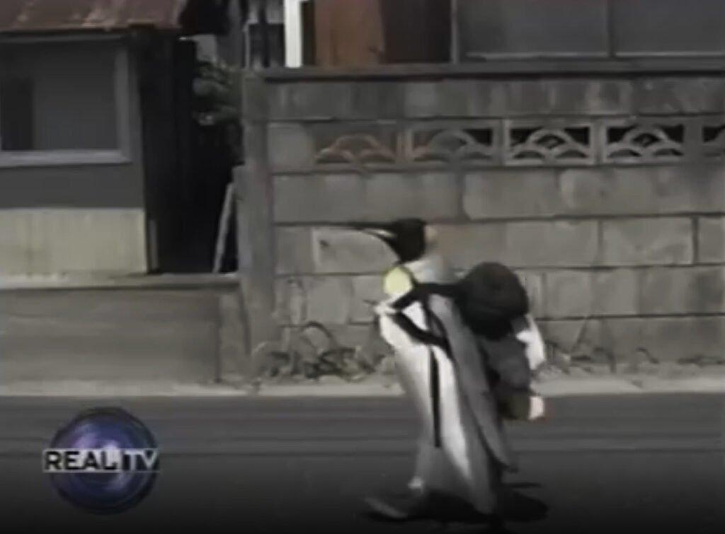 C рюкзачком на рынок за рыбкой. Кто идет? Пингвин!
