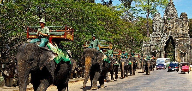 Погонцики слонов