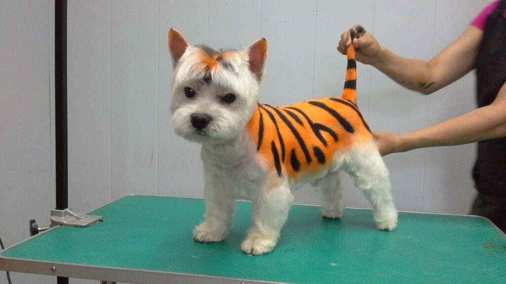 Из собаки в панду или тигра!