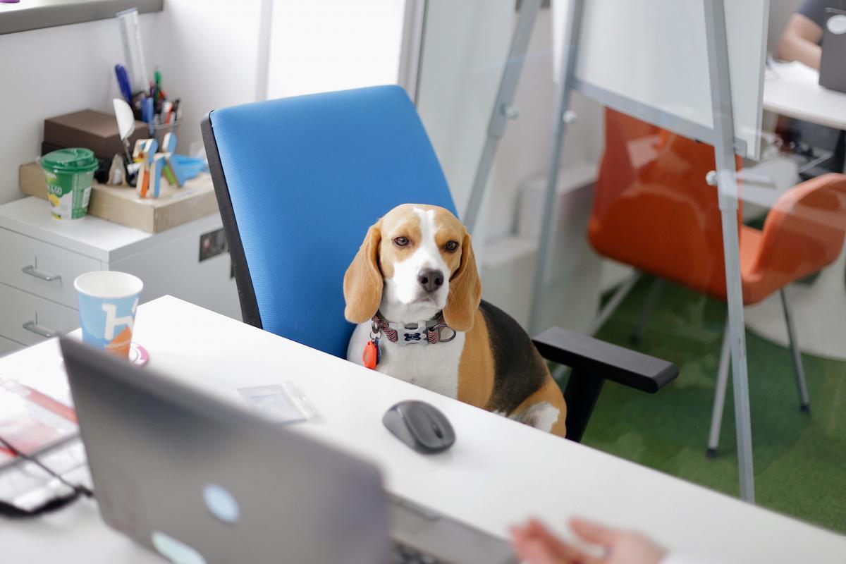 животное в офисе