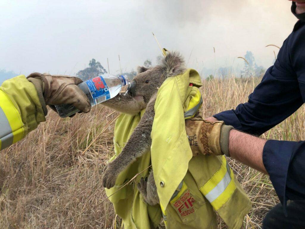 Подростки спасают коал от лесных пожаров в Австралии