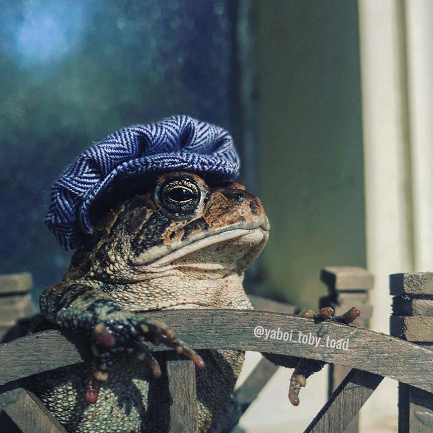жаба в домике инстаграмм