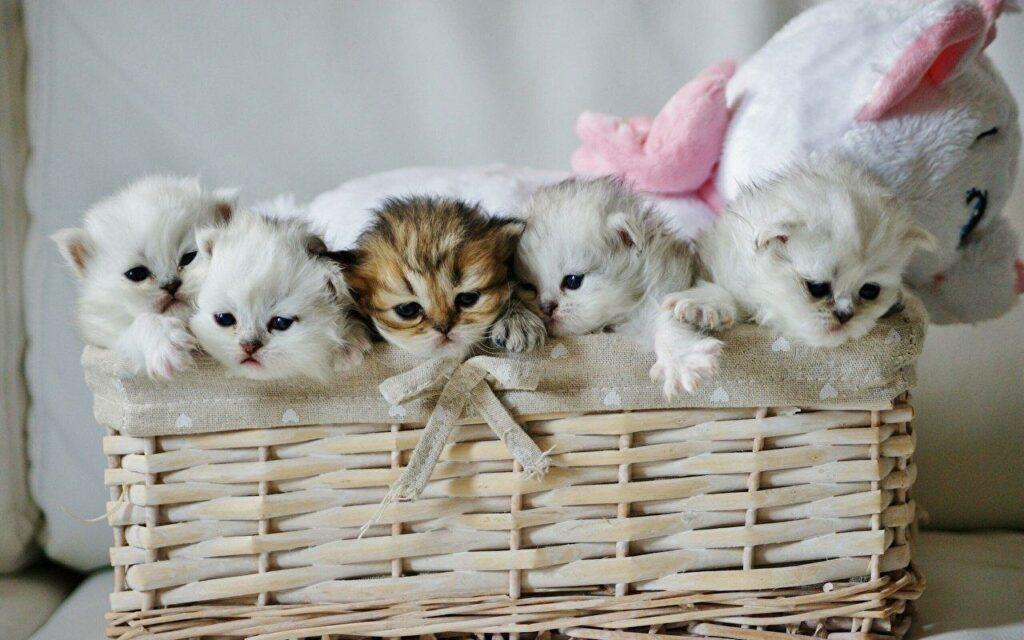 Cats Kittens Wicker 437944 1024x640 - Оптовикам