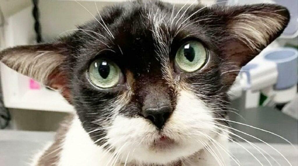 Кошка с необычной внешностью мастера Йода и другие животные