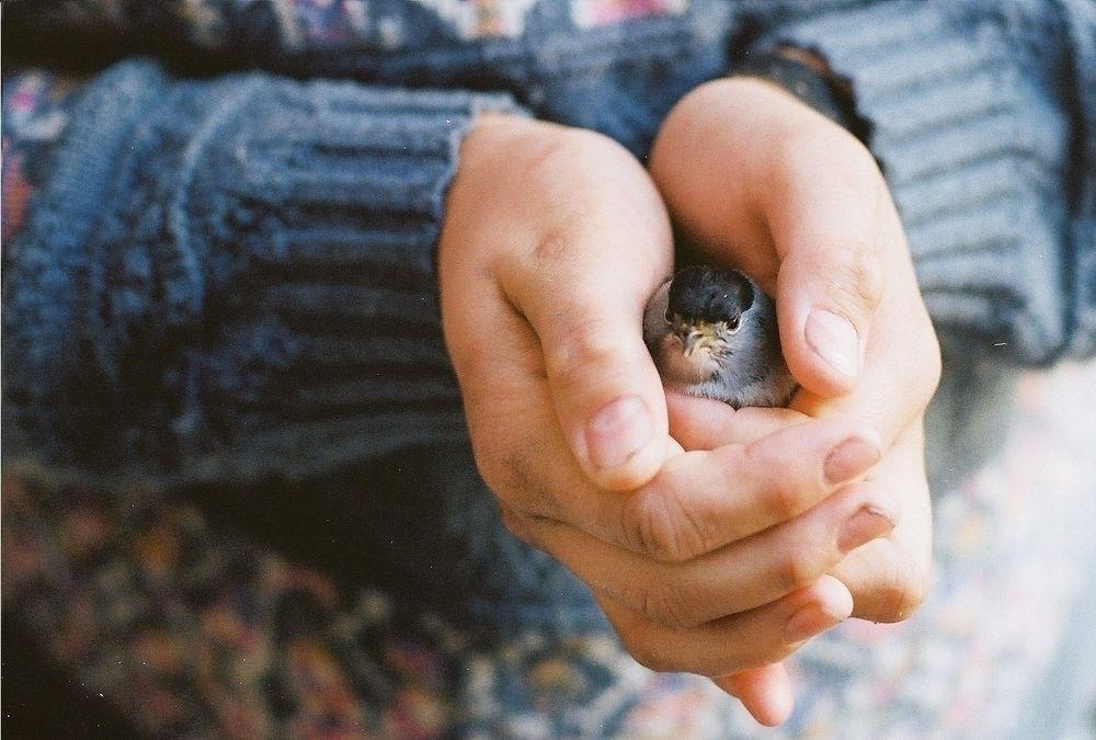 птичках в руках