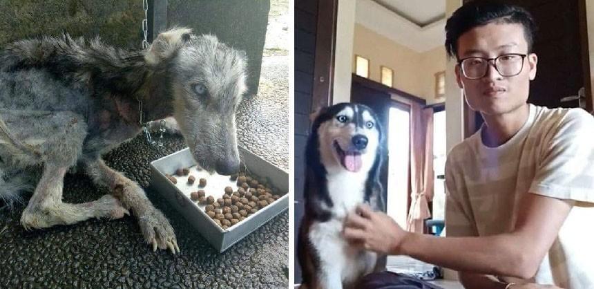 Фотографии собакенов, которым повезло. Как много мы можем!