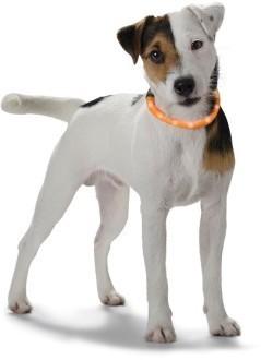 Hunter cветящийся шнурок на шею LED Yukon  оранжевый