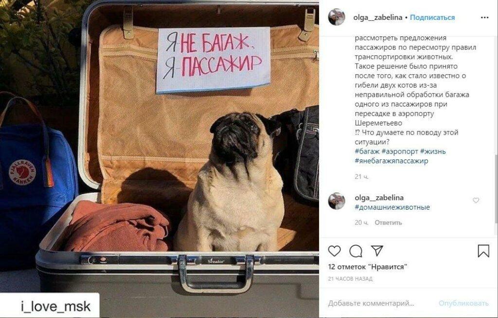 Если мое животное для них чемодан, то я - кто?