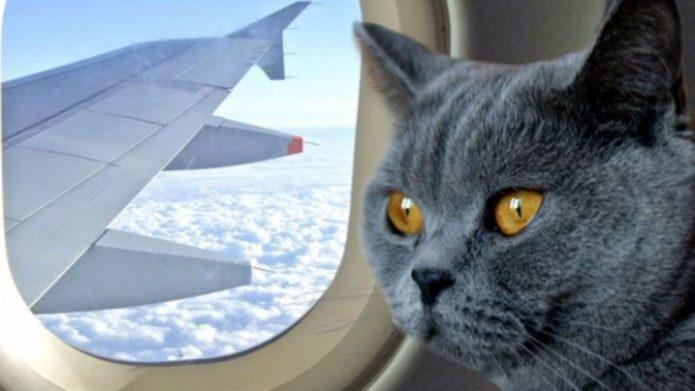 Коты и собаки VS Аэрофлот: бой на смерть или компромисс?