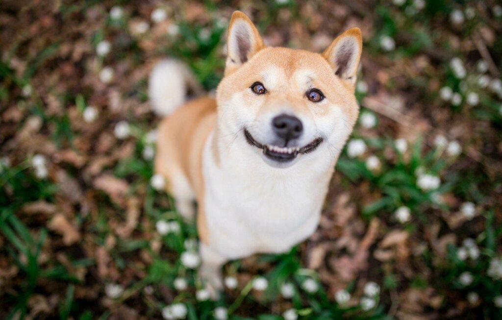 собака и улыбка