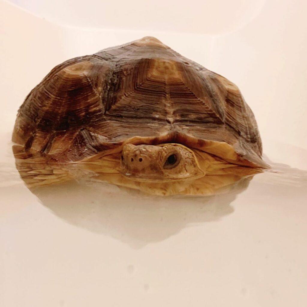 черепаха Этель смешная фотосессия