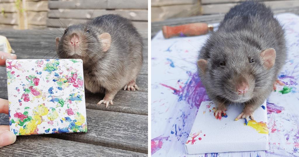 Крысиный арт-бизнес, или Самый необычный стартап