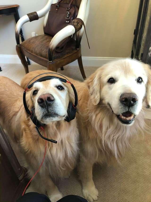 Как отучить собаку не шуметь в хоум-офисе? Ловите урок!