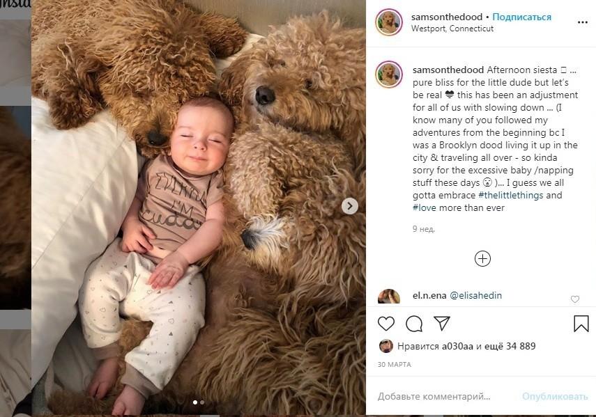 Малыш Тео и голдендудль Самсон – сладкая Инстаграм-парочка, в которую невозможно не влюбиться