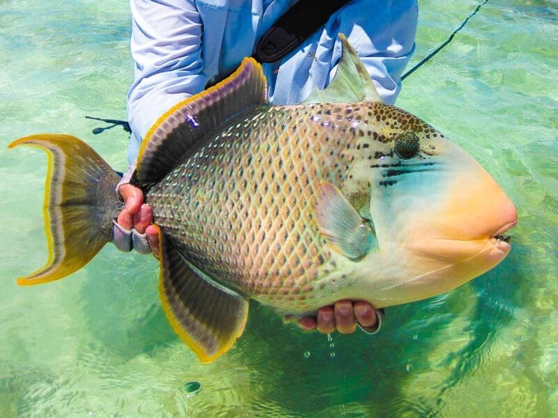 Рыба с человеческими зубами стала кошмаром недели-st