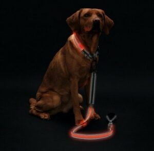 Hunter LED Ошейник Manoa Glow S оранжевый