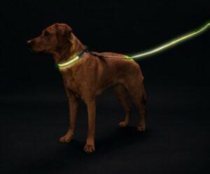 Hunter LED Поводок Manoa Glow желтый