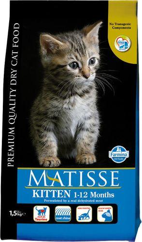 MATISSE Kitten 1