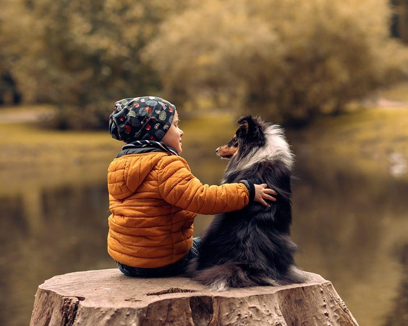 Собака породы Шелти лучшый друг детей