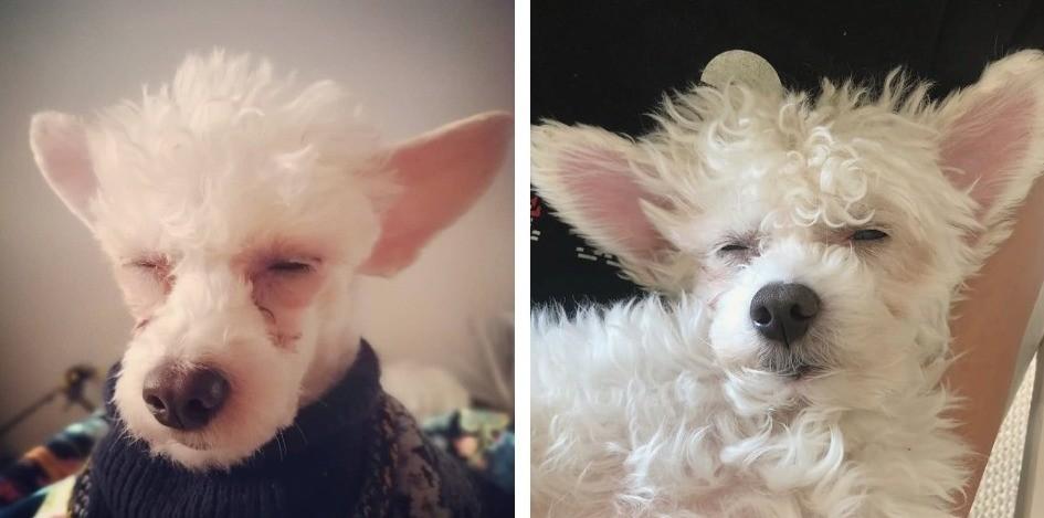 Темные дорожки у белой собаки: как мы справились с проблемой