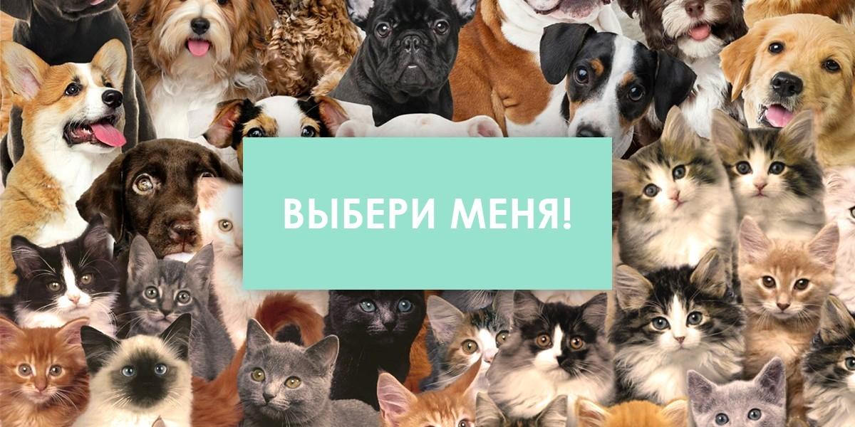 энциклопедия о породах