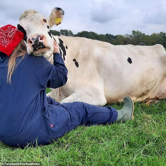 Почему обнимашки с коровой помогают бороться со стрессом
