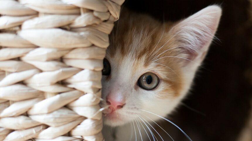 Почему кошки лидируют в списке домашних животных