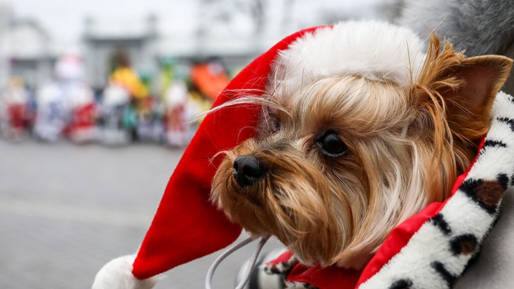 Рождественская песня, придуманная специально для собак