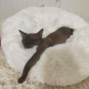 лежанка-бубликиз искусственного меха для собак и кошек