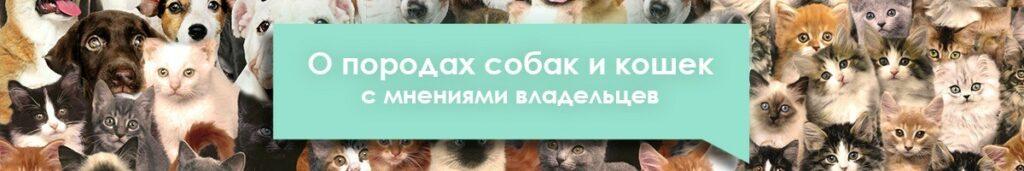 энциклопедия пород кошек с отзывами владельцев