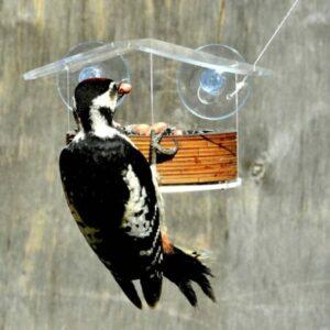 кормушка для птиц на присосках
