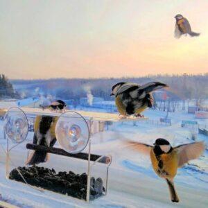 кормушка для птиц прозрачная