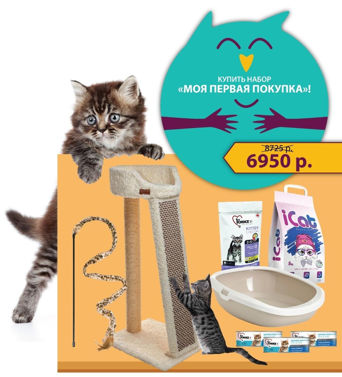 наборы для котят