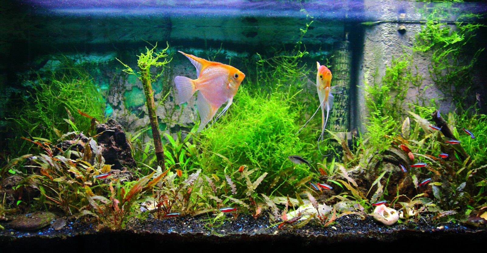 корм для рыб в аквариуме