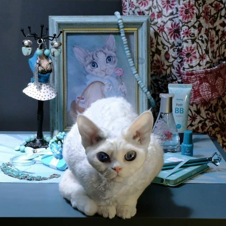Девон-рекс: кудрявая кошка, которая смотрит на мир с плеча хозяина