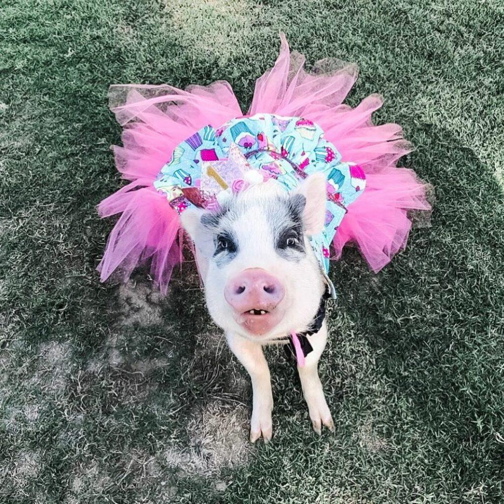 Платья для свинок, смокинги для хряков: необычный бизнес американки Дорин Берк