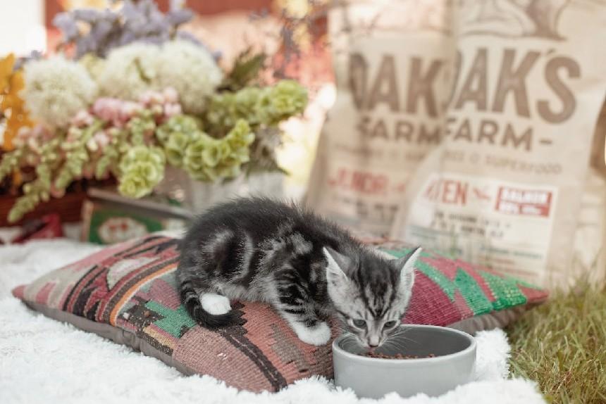 выбор корма для собак и кошек, Литва супер премиум