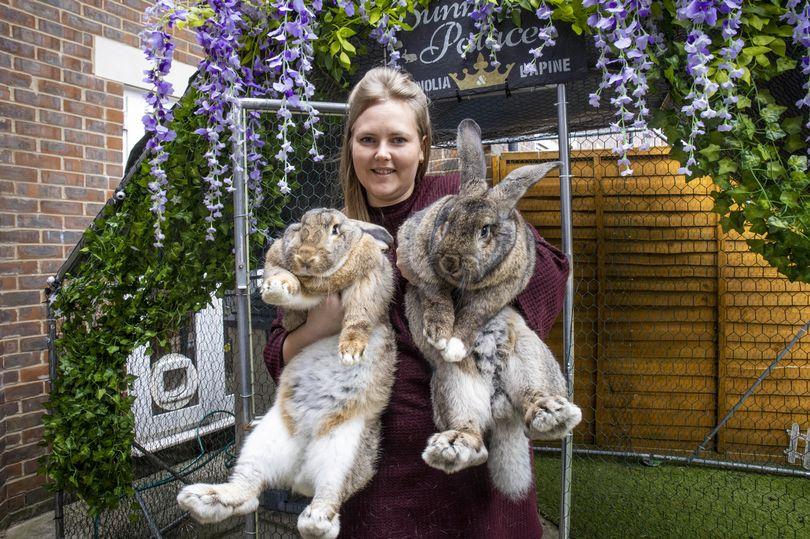 хозяйка с гигантскими кроликами