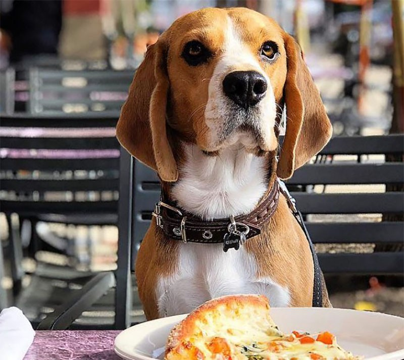 блюда высокой кухни для собак