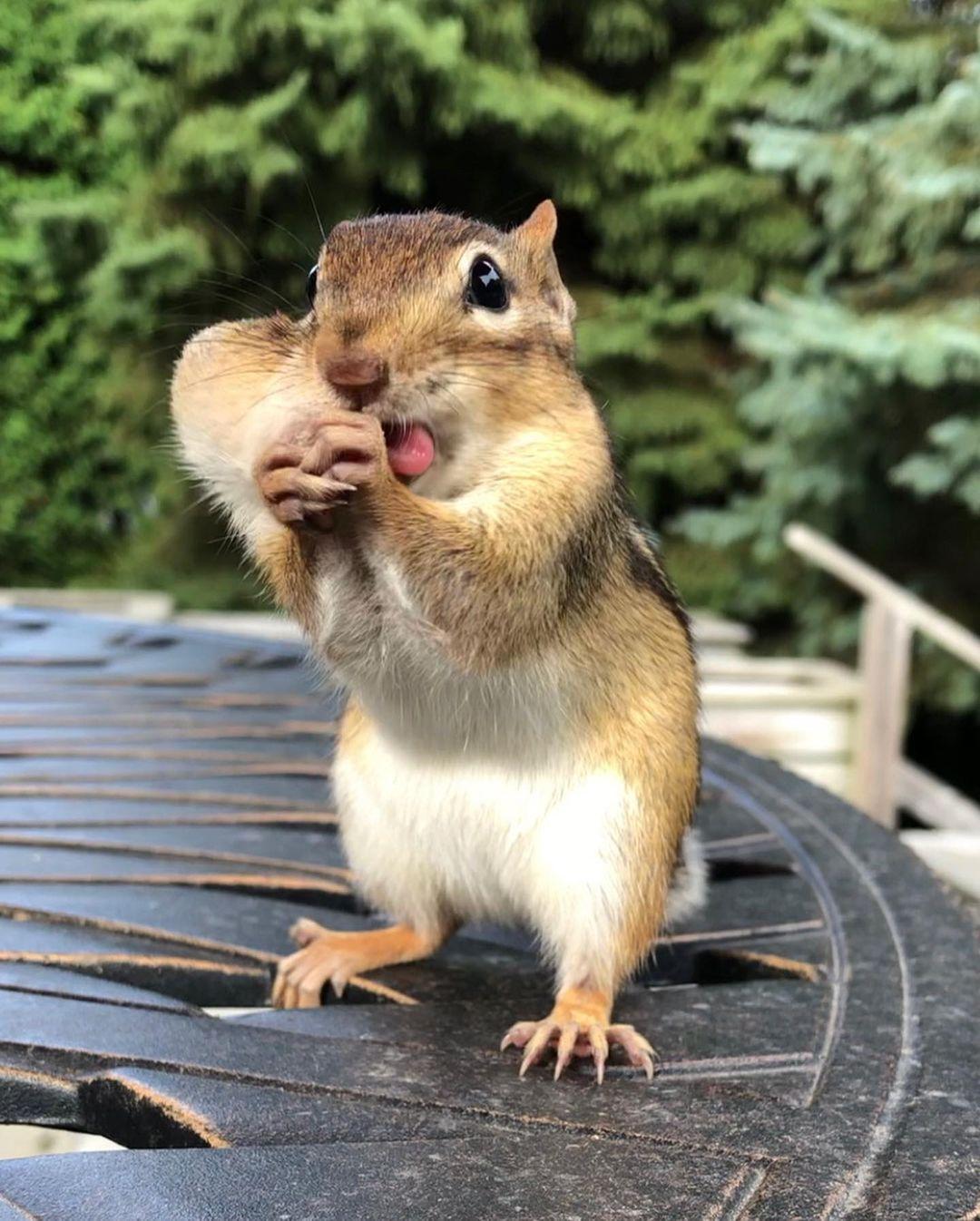бурундук с орешком 2