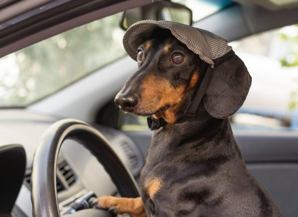 как перевозить собаку в машине, чтобы она не устала