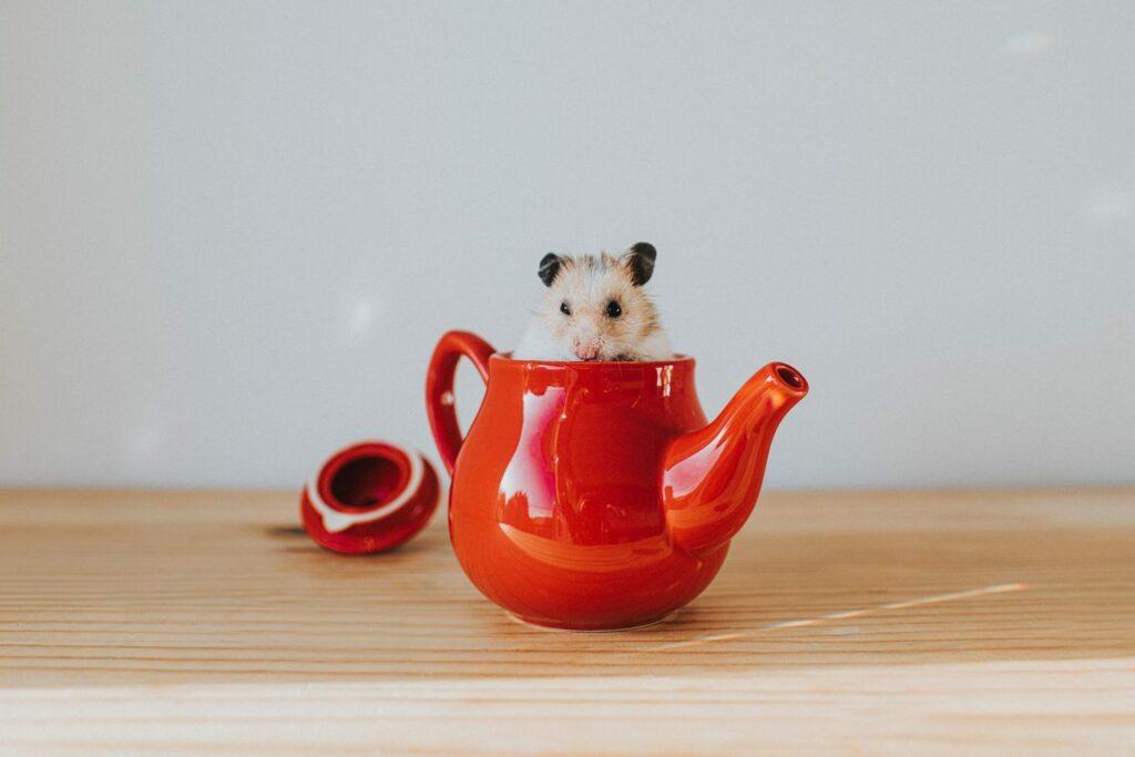 хомяк в чайнике