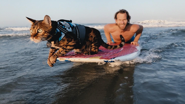 кошка серфингист