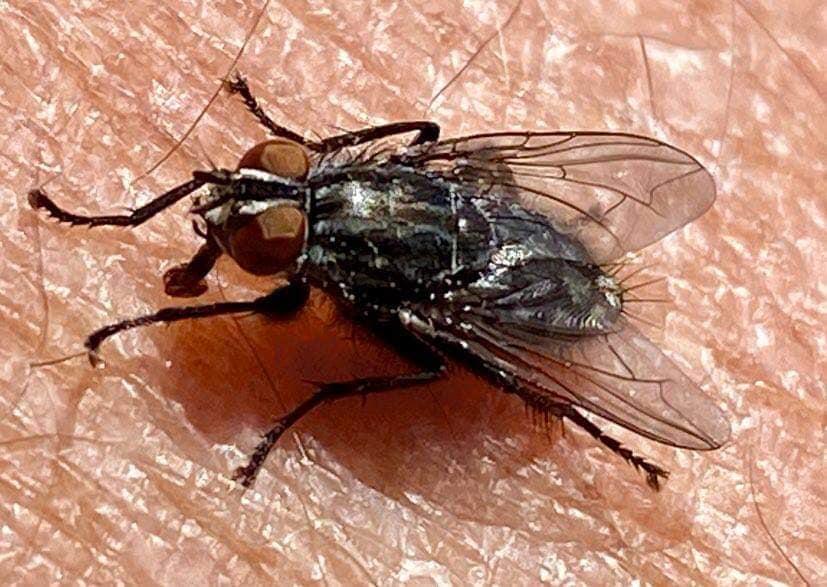 муха на ладони