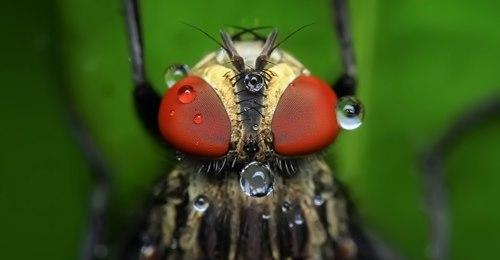 муха крупным планом