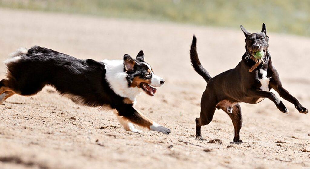 как гулять с собакой, когда жарко